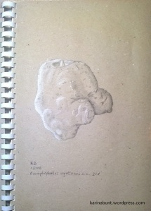Amorphophallus_vogelianus_s_n_Farbstift-1-1