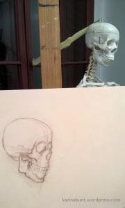 Anatomische_Studie_2_Schädel-1