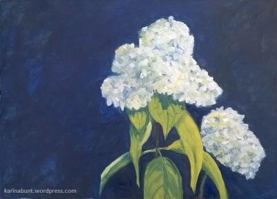 weisse Hortensienblüte