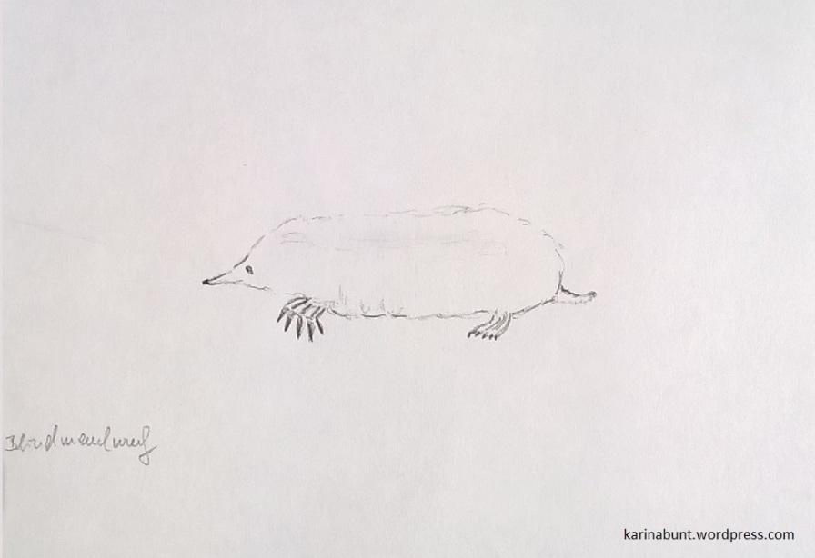 Bleistift auf Papier, 15x20cm