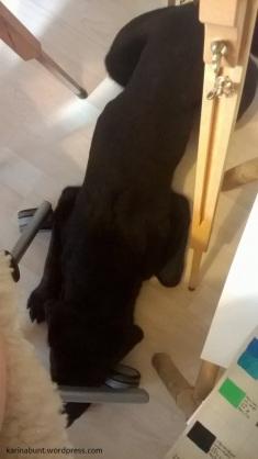 Lenny hilft beim Malen, 2