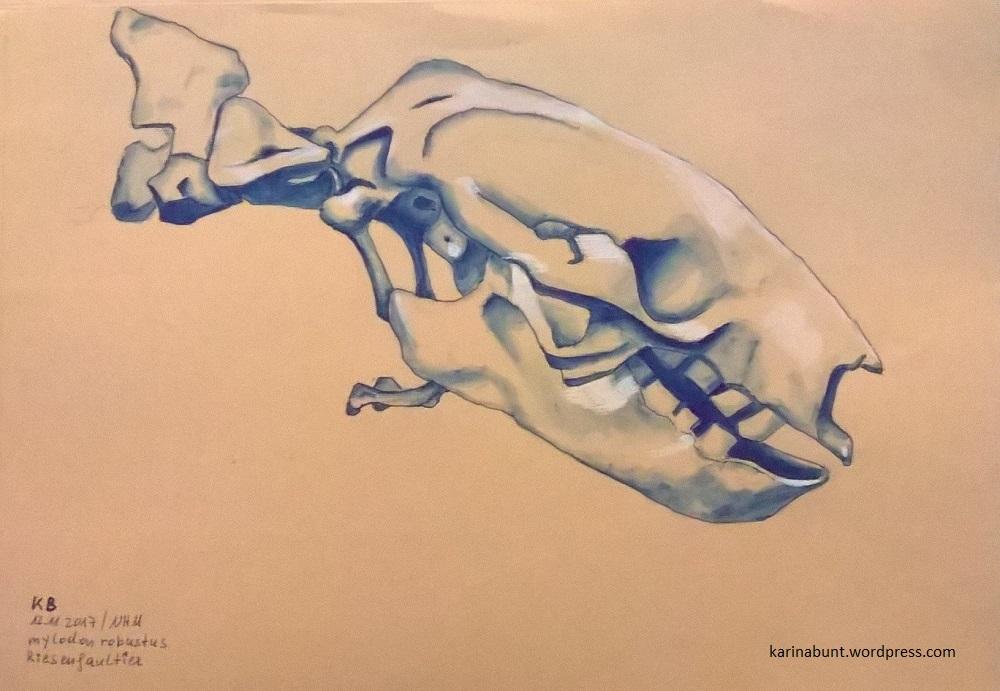 Skelettkopf Riesenfaultier Seitenansicht