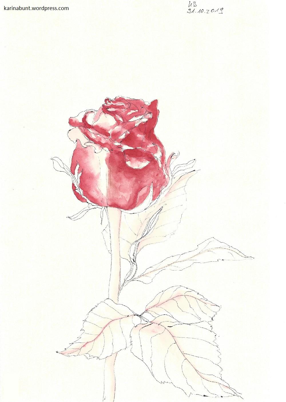 Darstellung einer Rose
