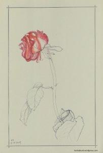 Zeichnung einer verwelkten Rose